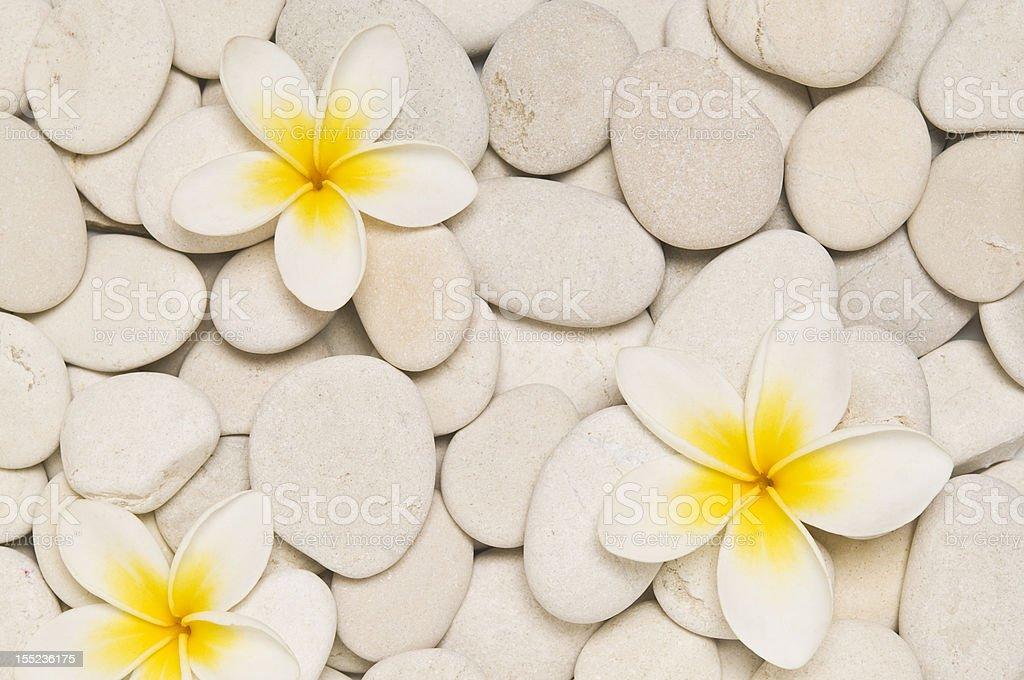 Three frangipani flowers royalty-free stock photo