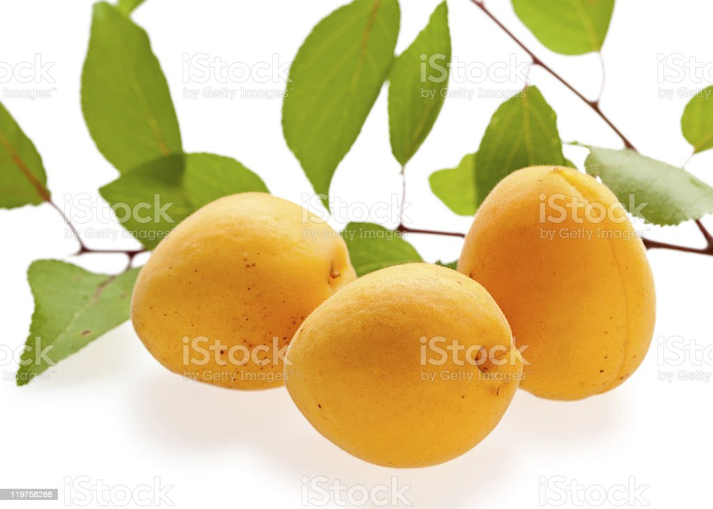Three fresh apricots and green branch royalty-free stock photo