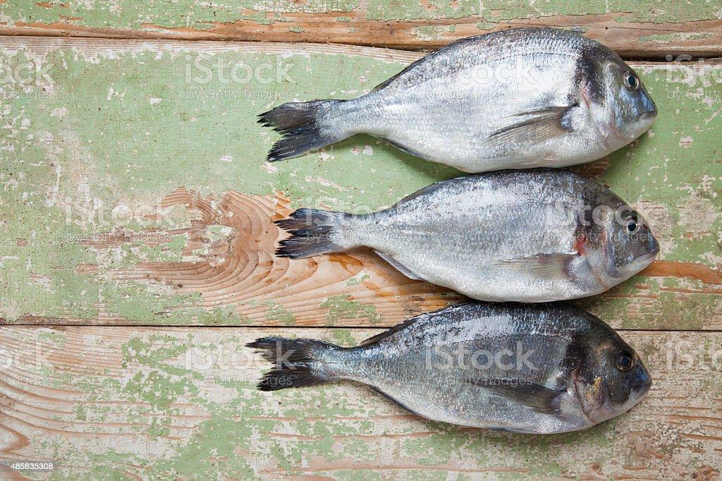 Three Fresh Fish stock photo