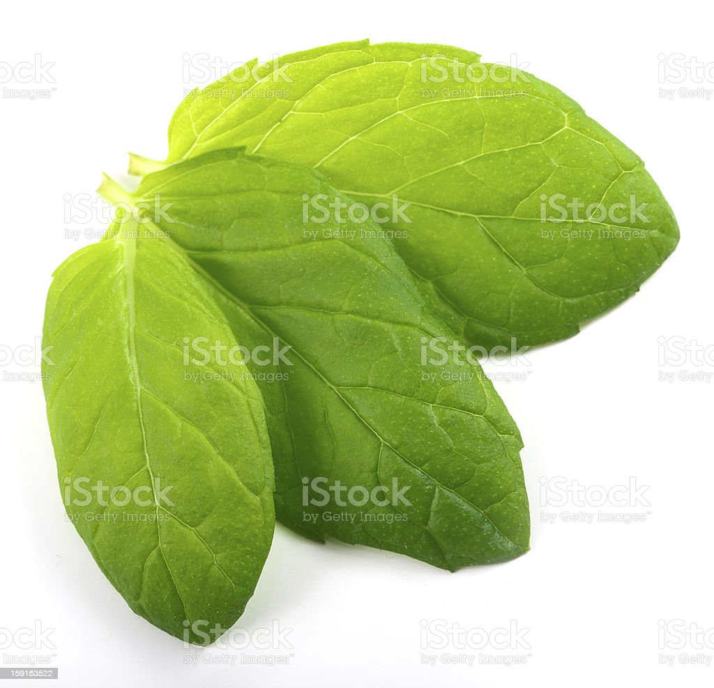 three fresh mint leaves royalty-free stock photo