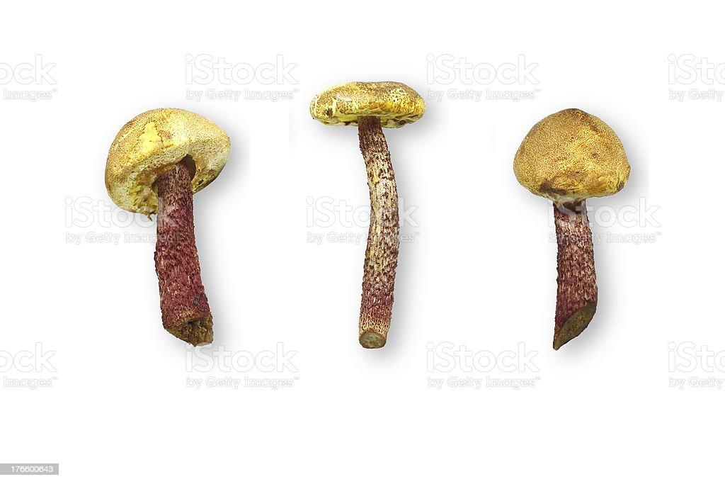 Trzy świeże grzyby na białym tle zbiór zdjęć royalty-free