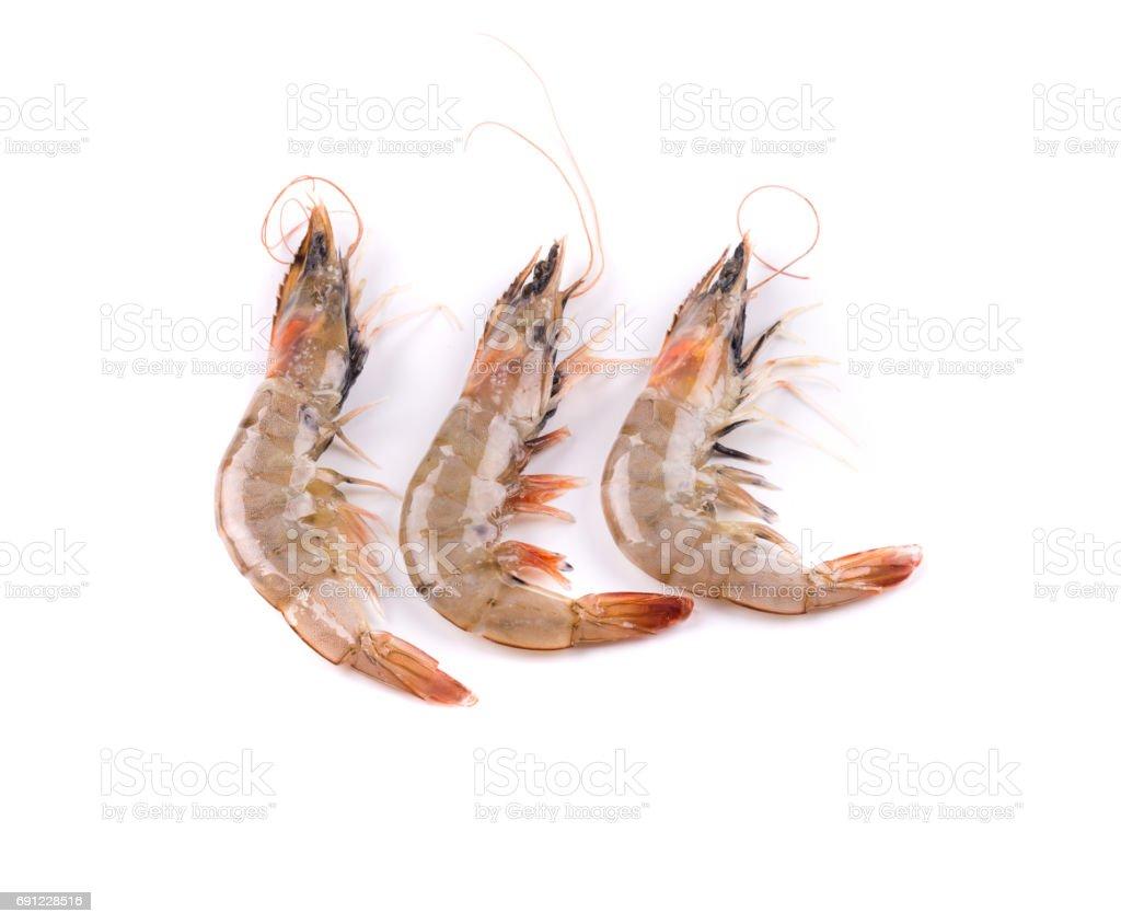Three fresh shrimps. stock photo