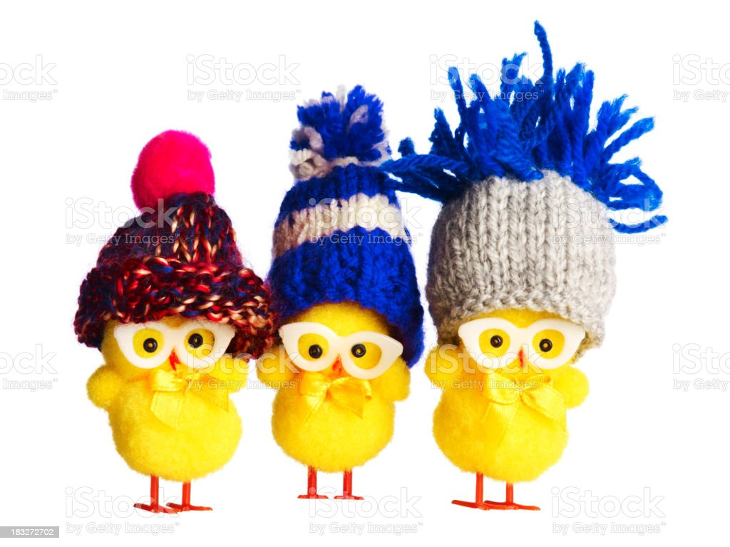 Three funny chicks wearing winter hats stock photo