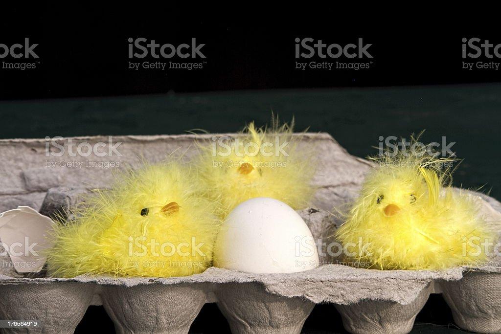 Three Fuzzy Chicks in Egg Carton royalty-free stock photo