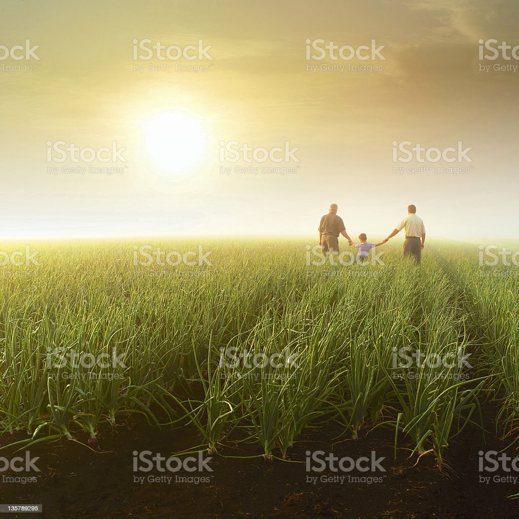 Three generations (grandfather, son, grandson) holding hands in farm field stock photo