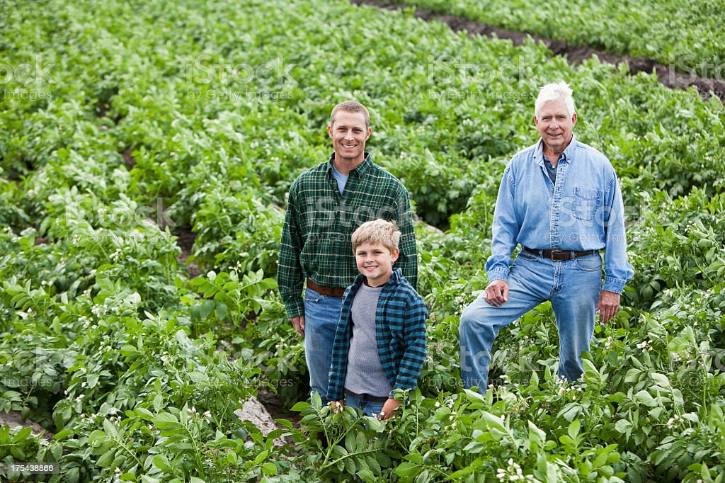 Three generations on family farm standing in crop field stock photo