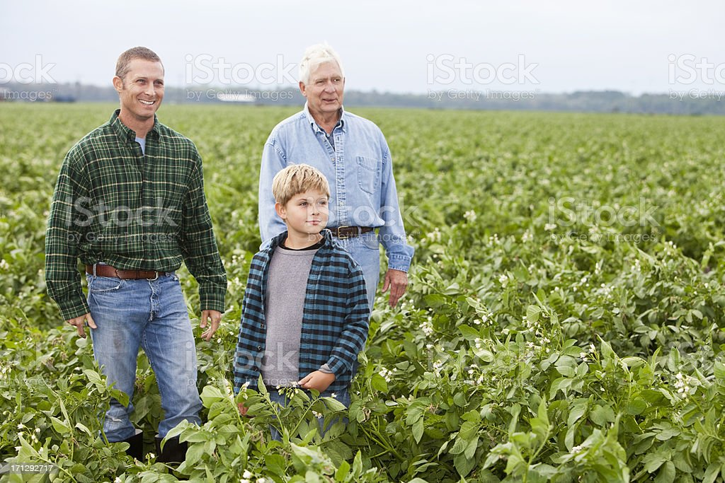 Three generations on the family farm standing in crop field stock photo