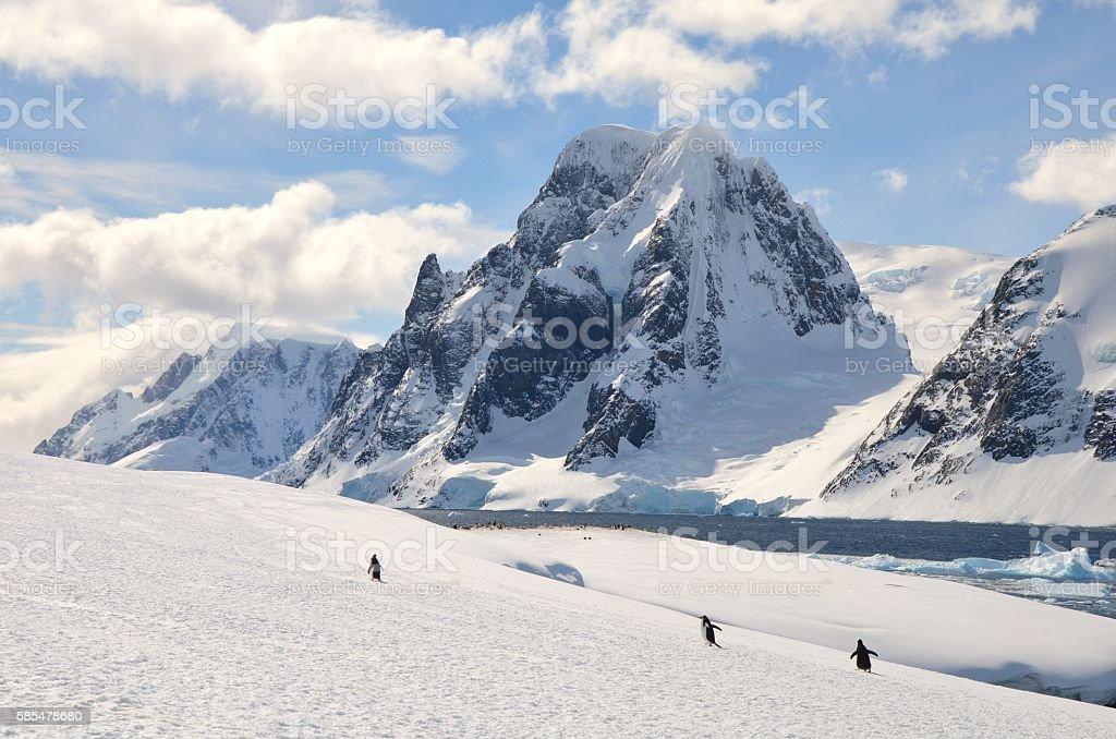 Three Gentoos and Mountains stock photo