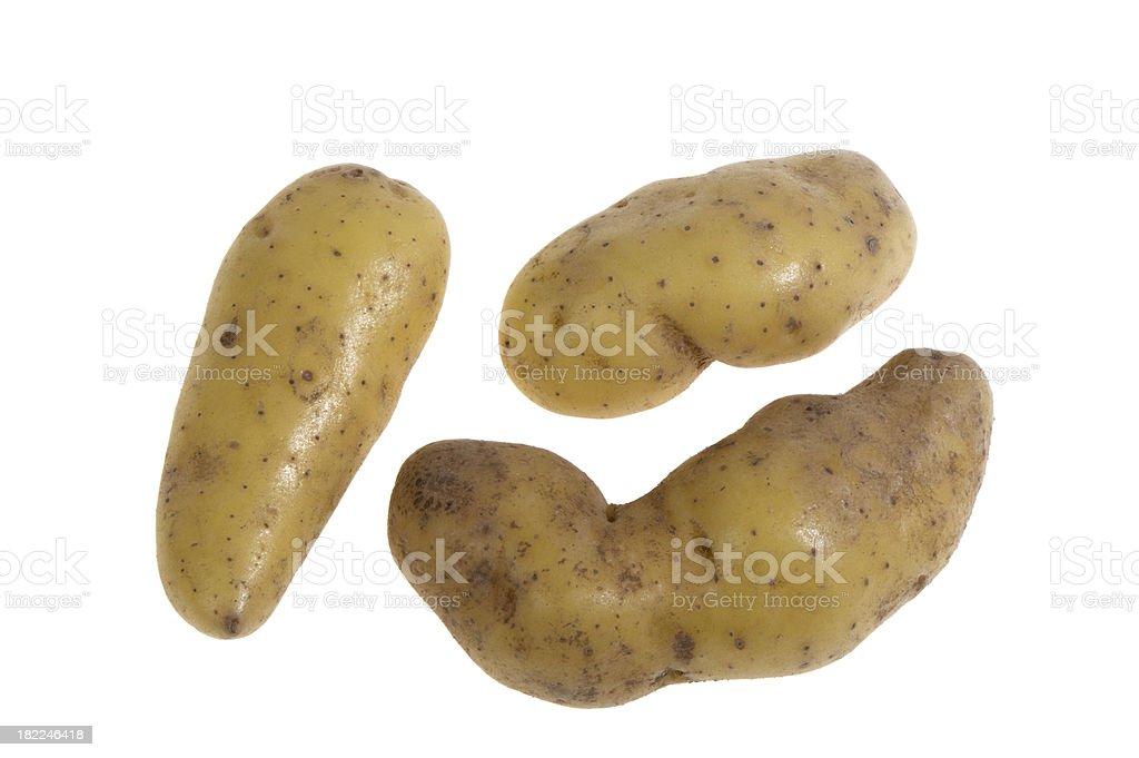 Three golden fingerling potatoes on white background stock photo