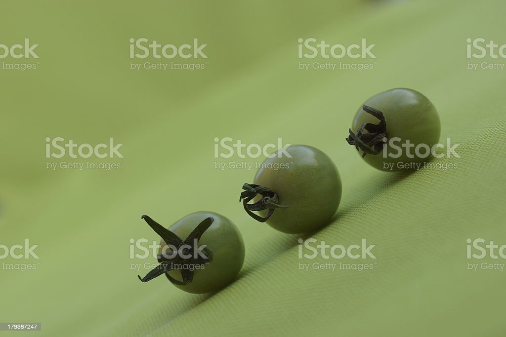 Three Green Tomatoes. stock photo