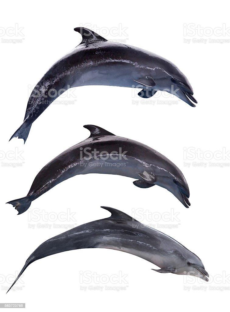 three grey isolated doplhins in jump stock photo