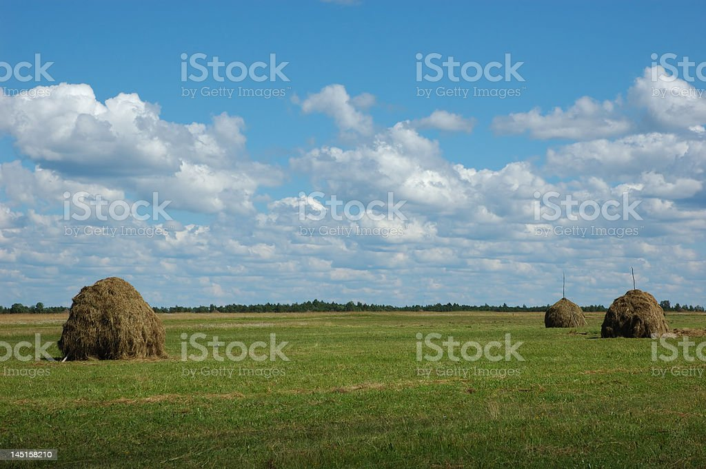 Three haystack on the meadow royalty-free stock photo