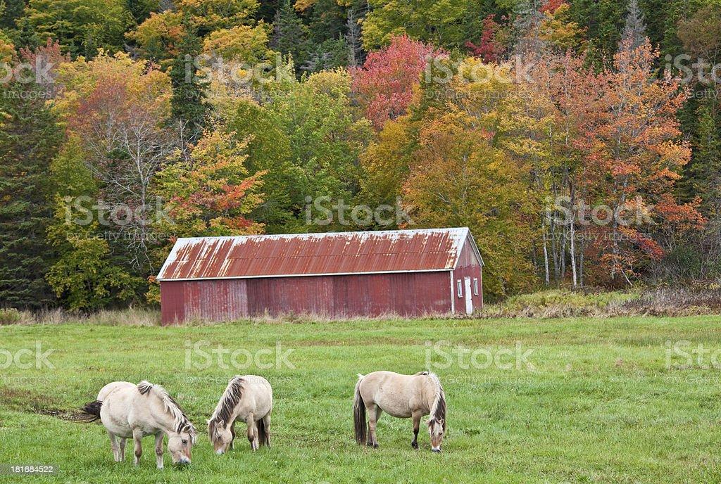 Three Horses and Barn royalty-free stock photo