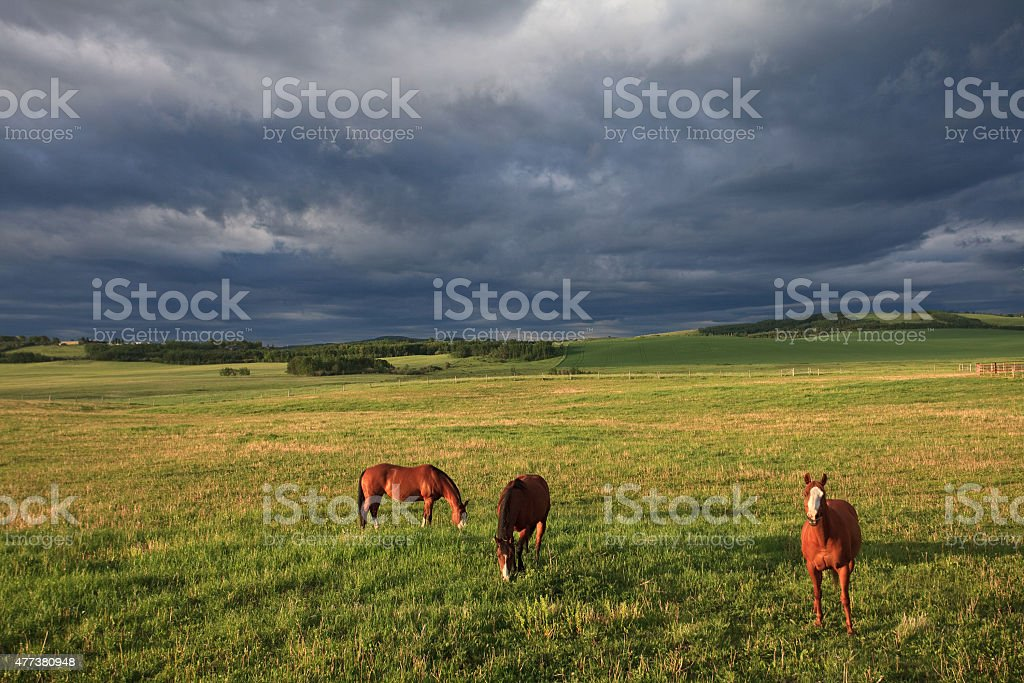 Three Horses Graizing on the Great Plains With Storm stock photo