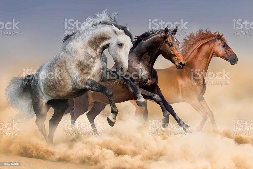 Three horses run stock photo