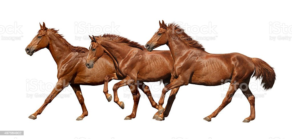 Three horses running fast isolated on white stock photo