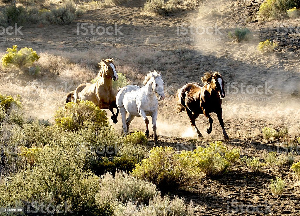 Three horses running royalty-free stock photo