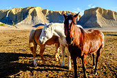 three horses stand idle in the late afternoon sun