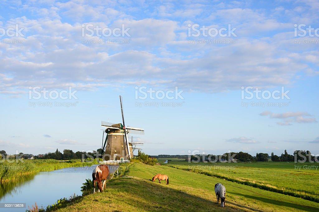 Three horses, three windmills stock photo