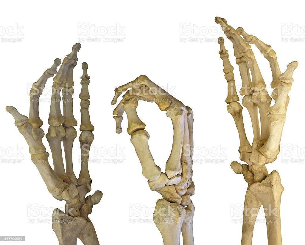 three human hands skeletons on white stock photo