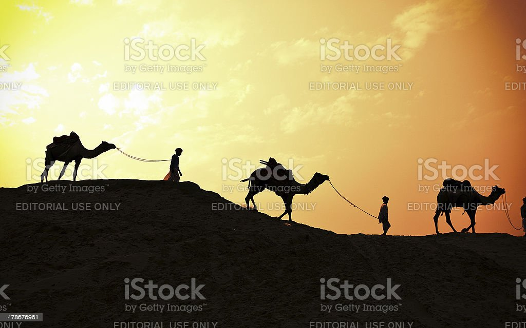 Three Indian camel riders at sunset royalty-free stock photo