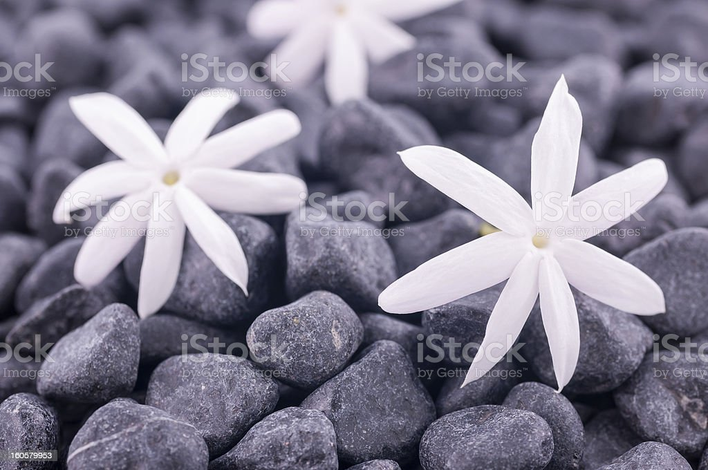 Three jasmine flowers on zen stones close up royalty-free stock photo