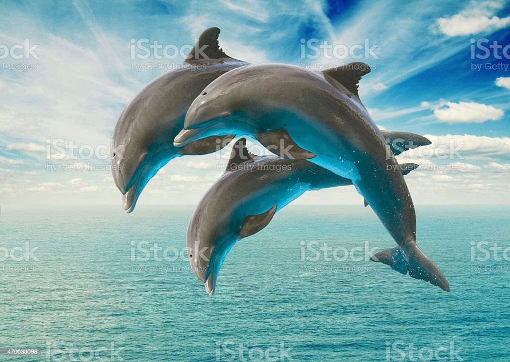 three  jumping dolphins stock photo