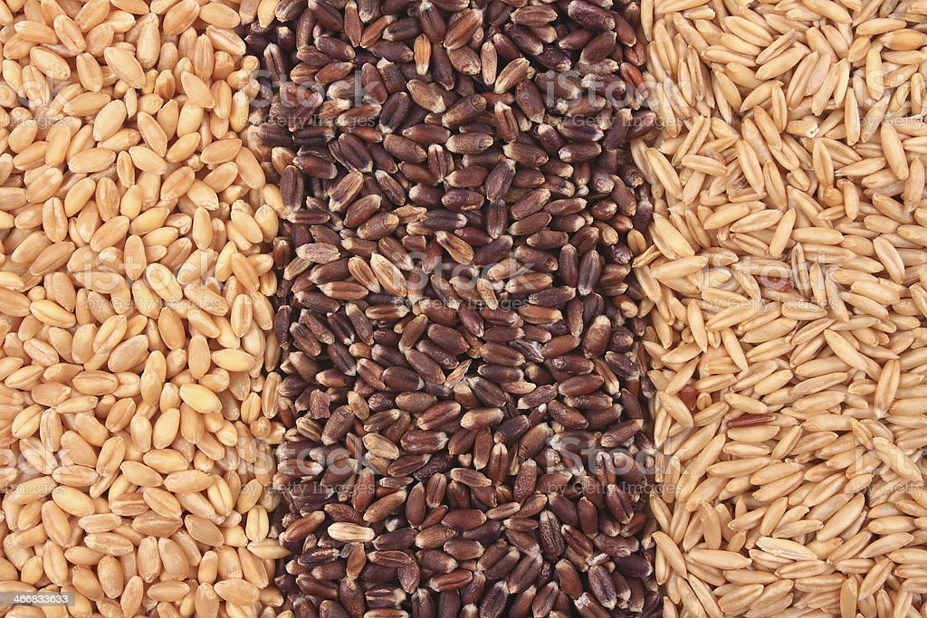 Three kinds of Wheat stock photo