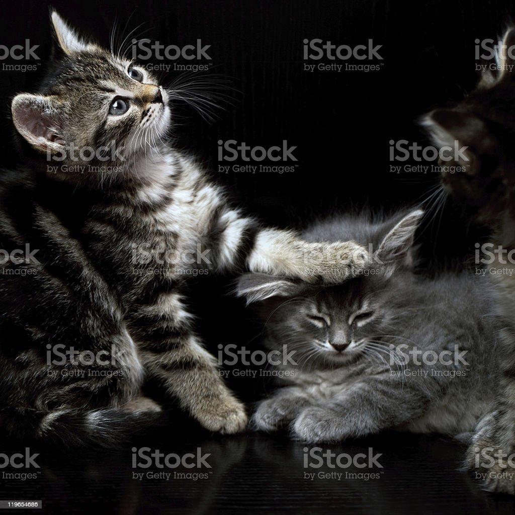 Three Kitten On Black stock photo
