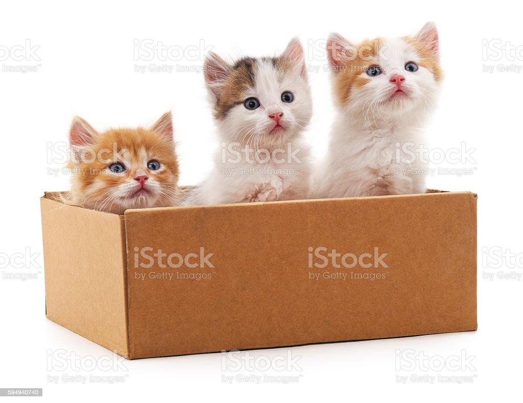 Three kittens in a box. stock photo