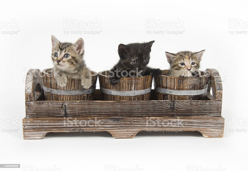 Three kittens in  flower pots royalty-free stock photo