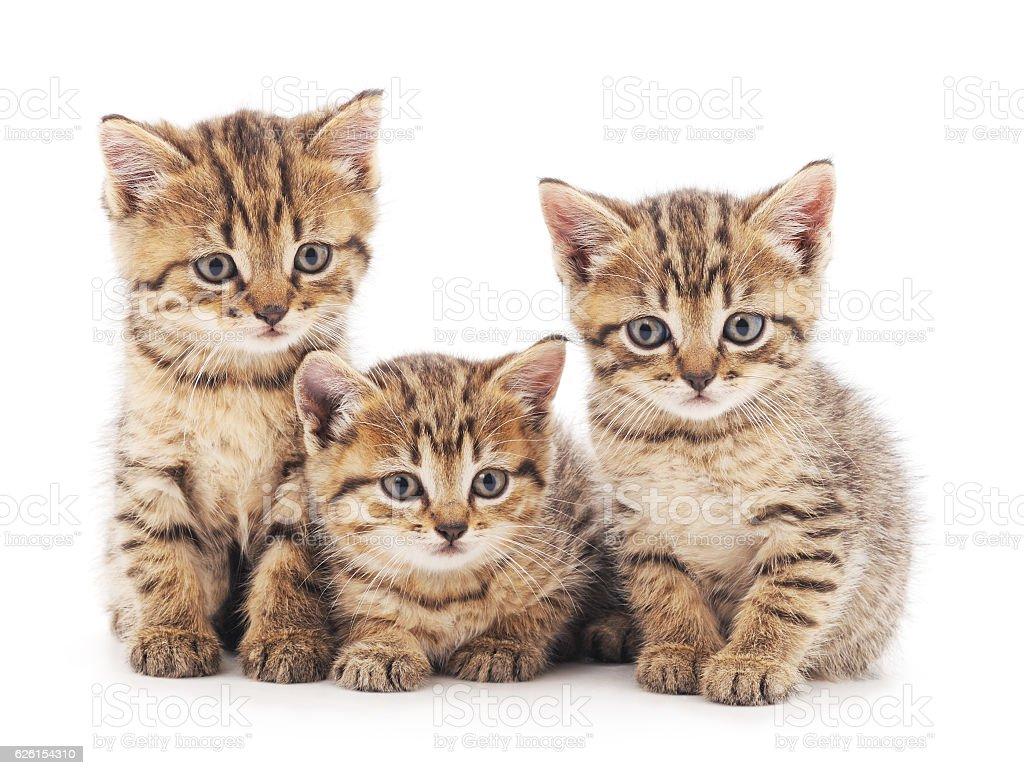 Three kittens. stock photo