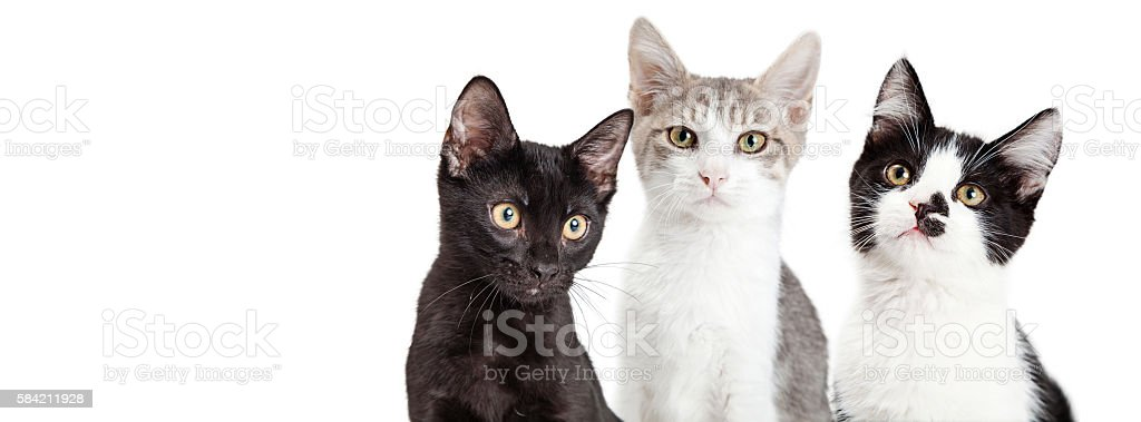 Three Kittens Together Social Media Banner stock photo