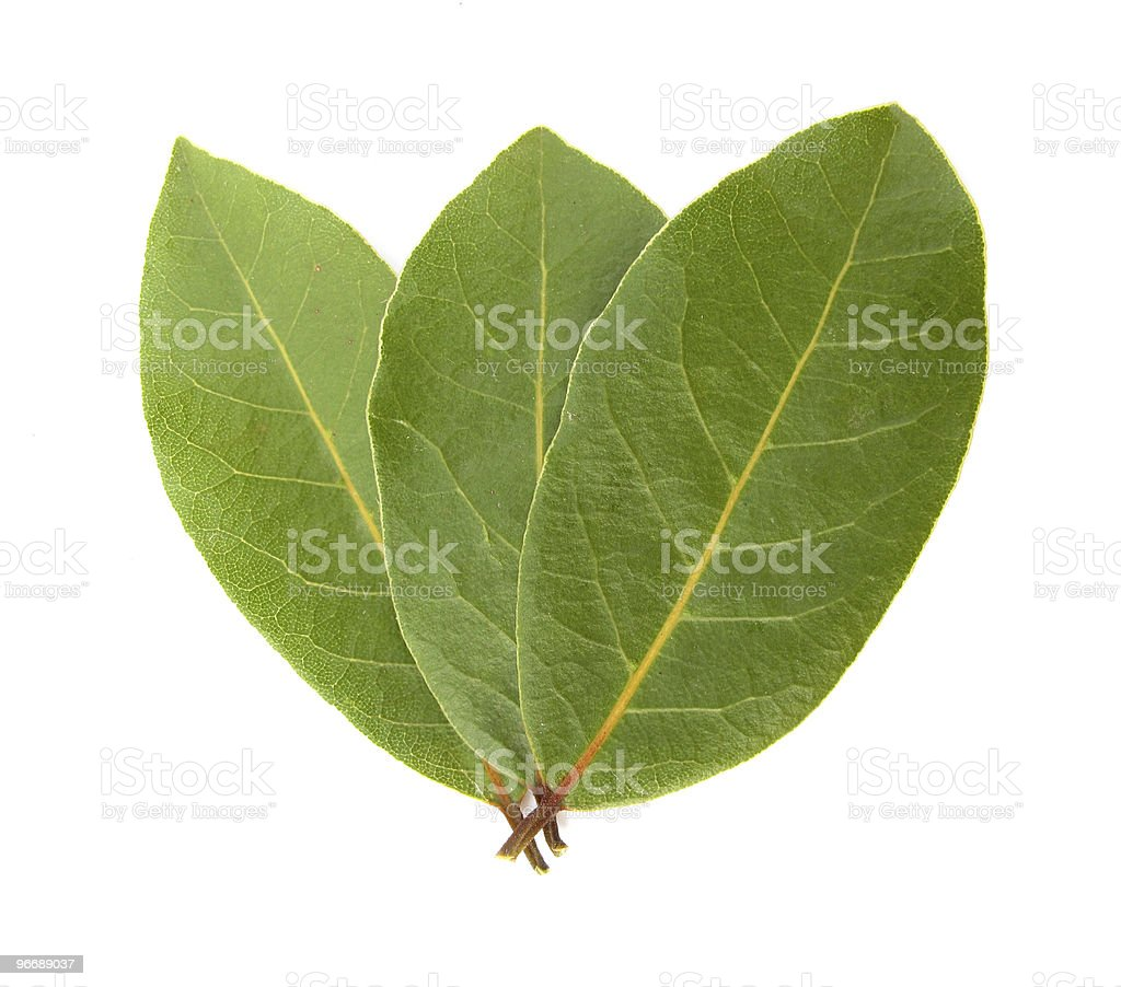 Three laurel bay leaves royalty-free stock photo
