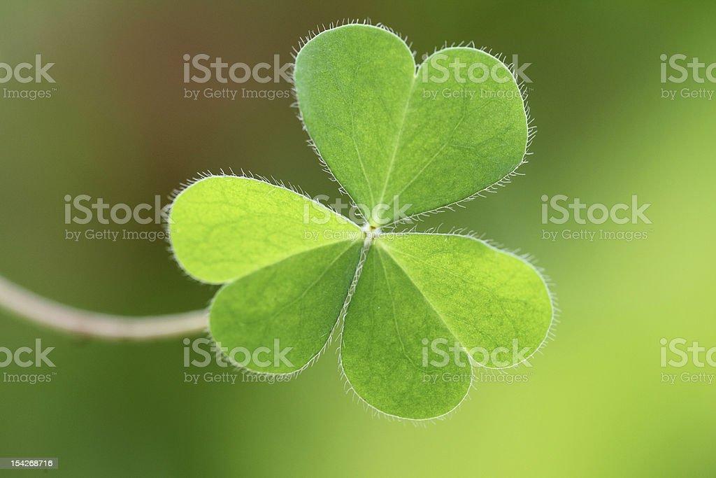 Three leaf clover royalty-free stock photo