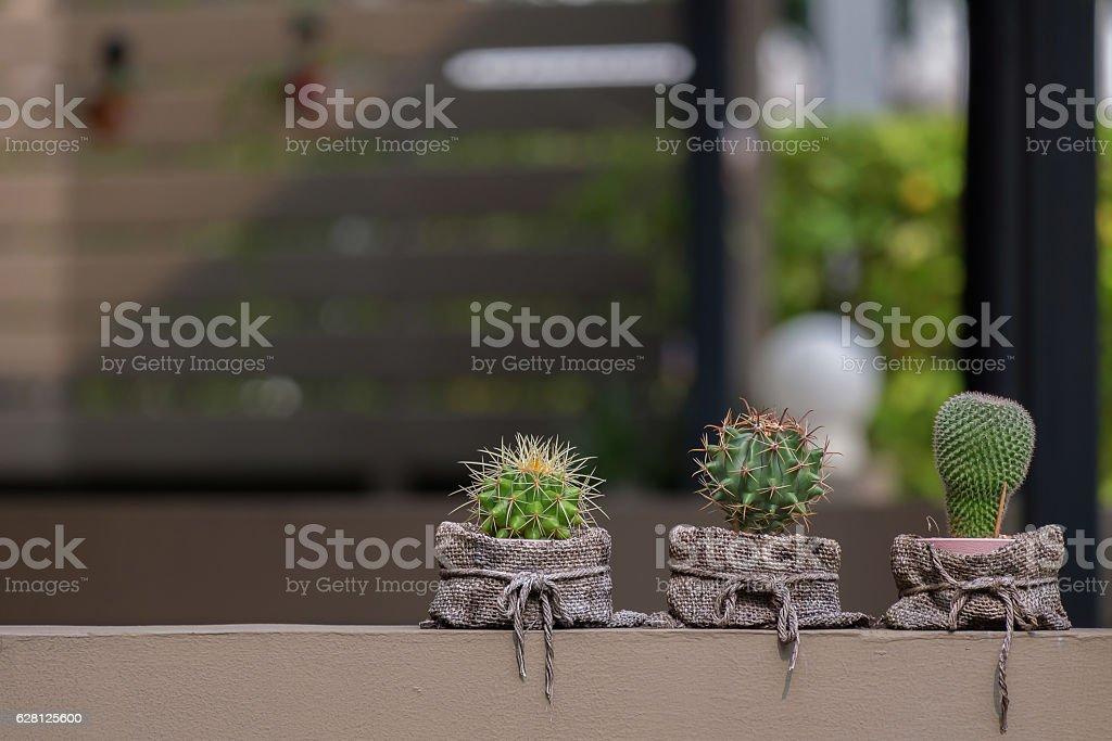 Three little cactus in sack bag. stock photo