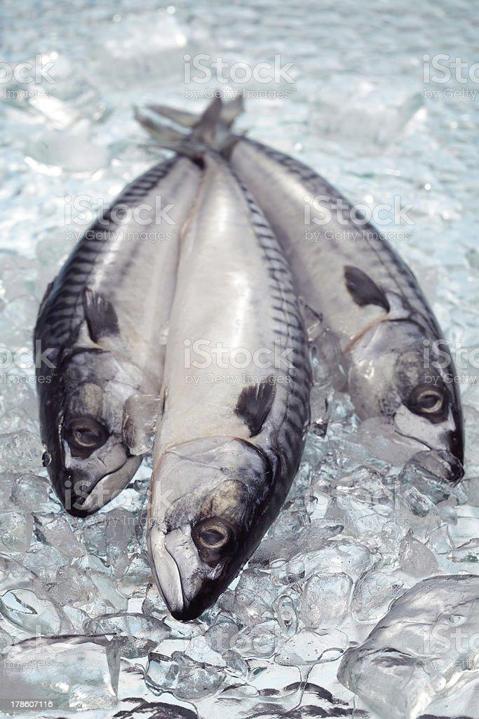 Three mackerels stock photo