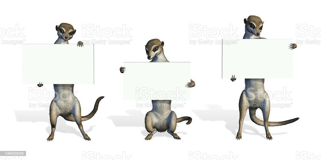 Three Meerkats Holding Blank Signs royalty-free stock photo