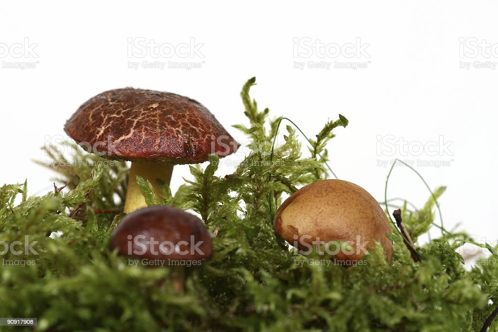 three mushrooms royalty-free stock photo
