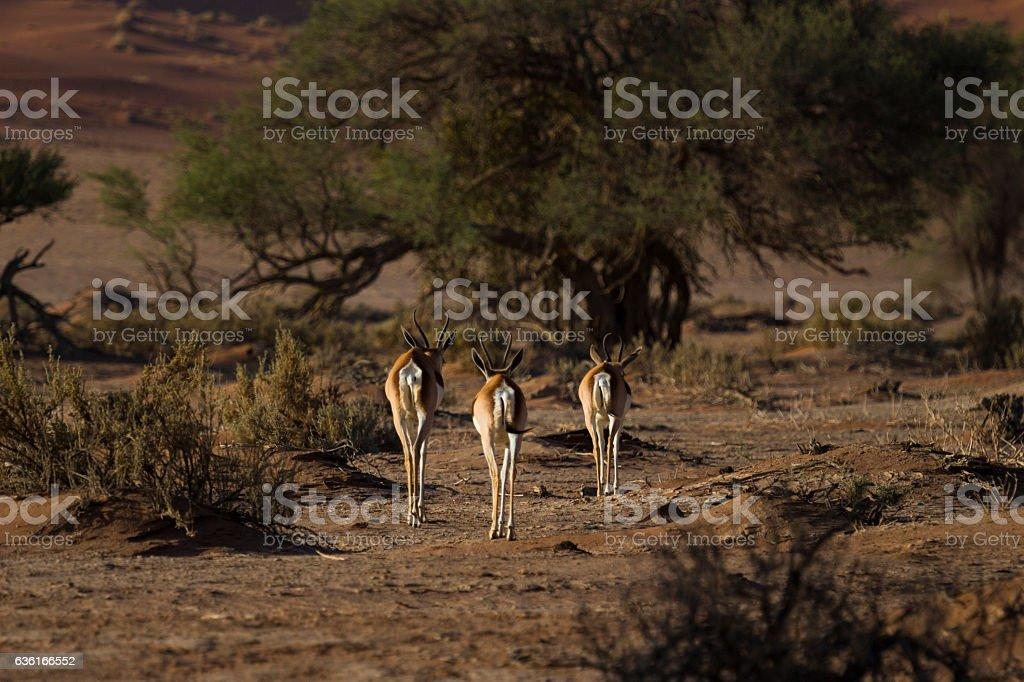 Three Musketeers stock photo
