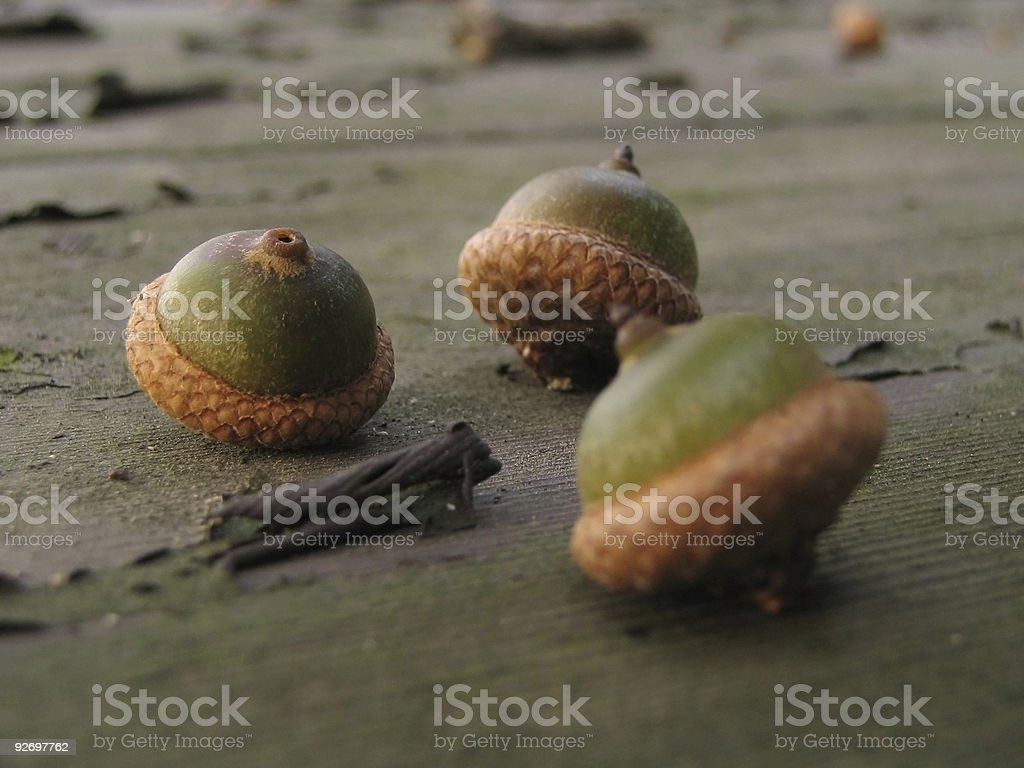 Three Nuts stock photo