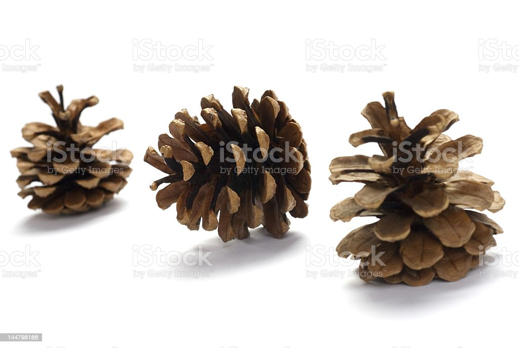 Three of Pine Cones royalty-free stock photo
