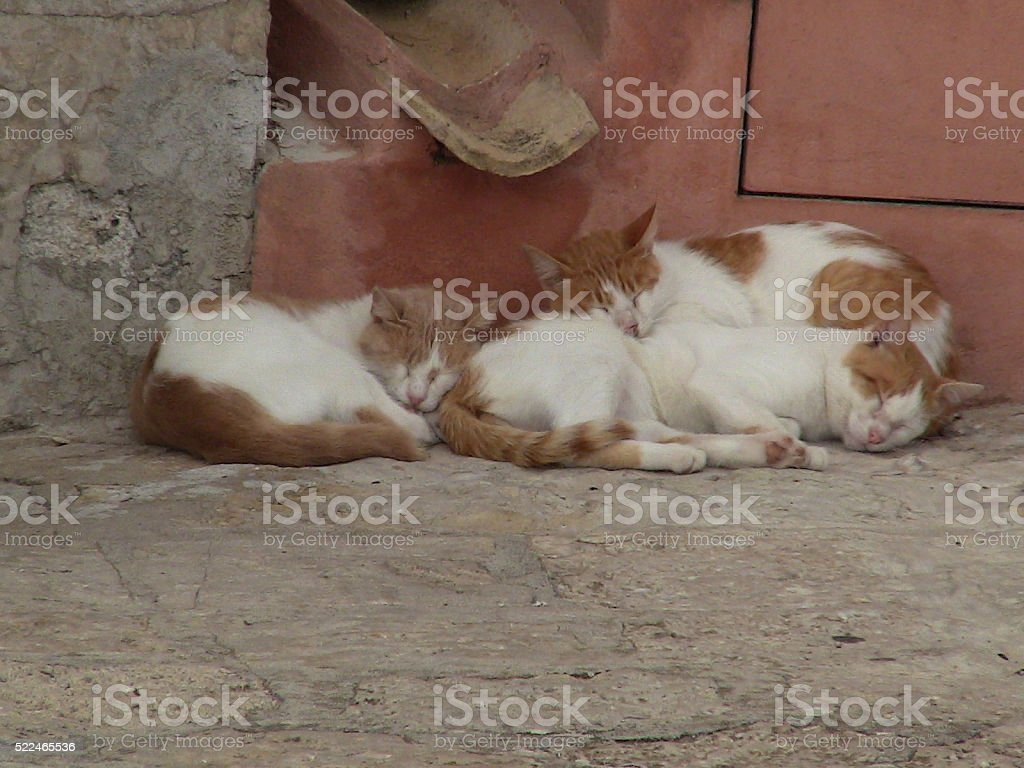 Three Orange and Cream Cats Sleeping in Erice, Sicily stock photo