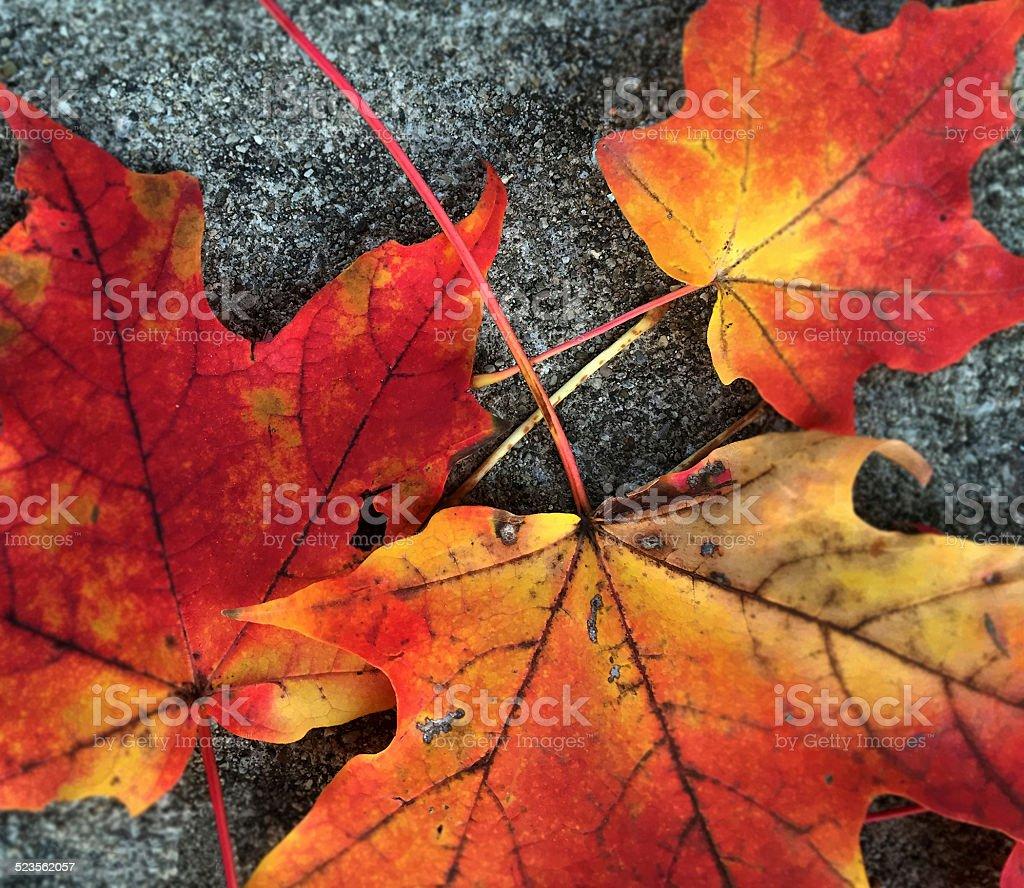 Three Orange Leaves stock photo