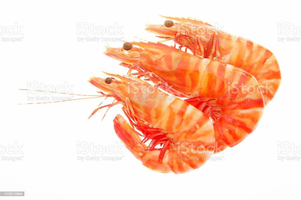 Three orange prawns isolated on a white background royalty-free stock photo