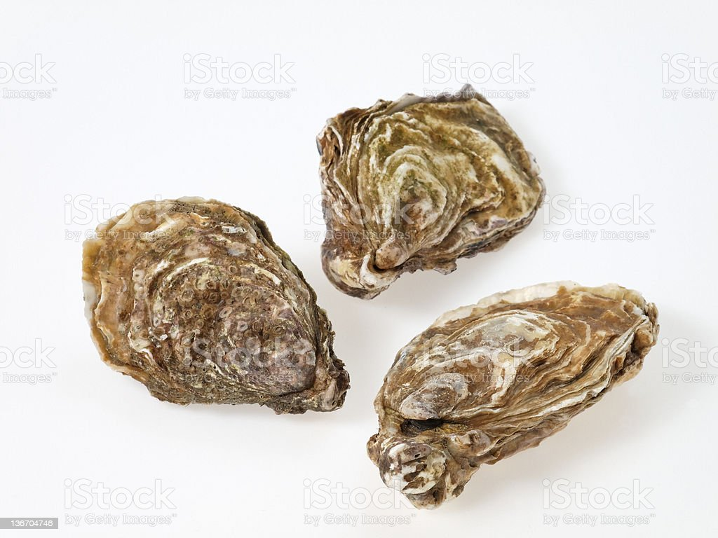 Three oysters stock photo