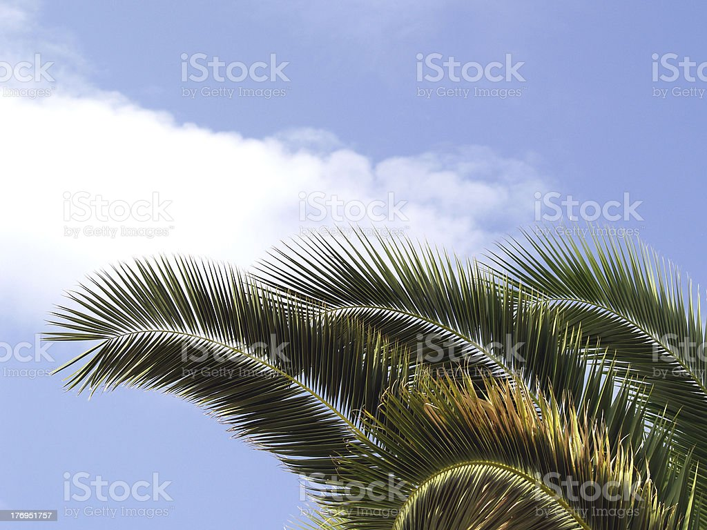 three palm frond stock photo