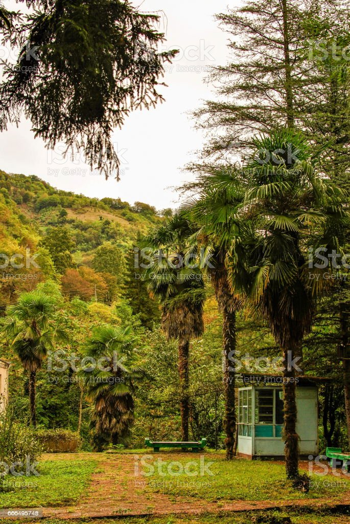 Three palm trees in a park in the mountains stock photo