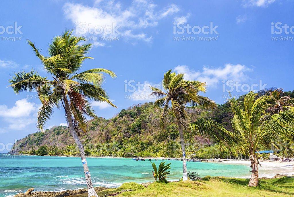 Three Palm Trees in Panama stock photo