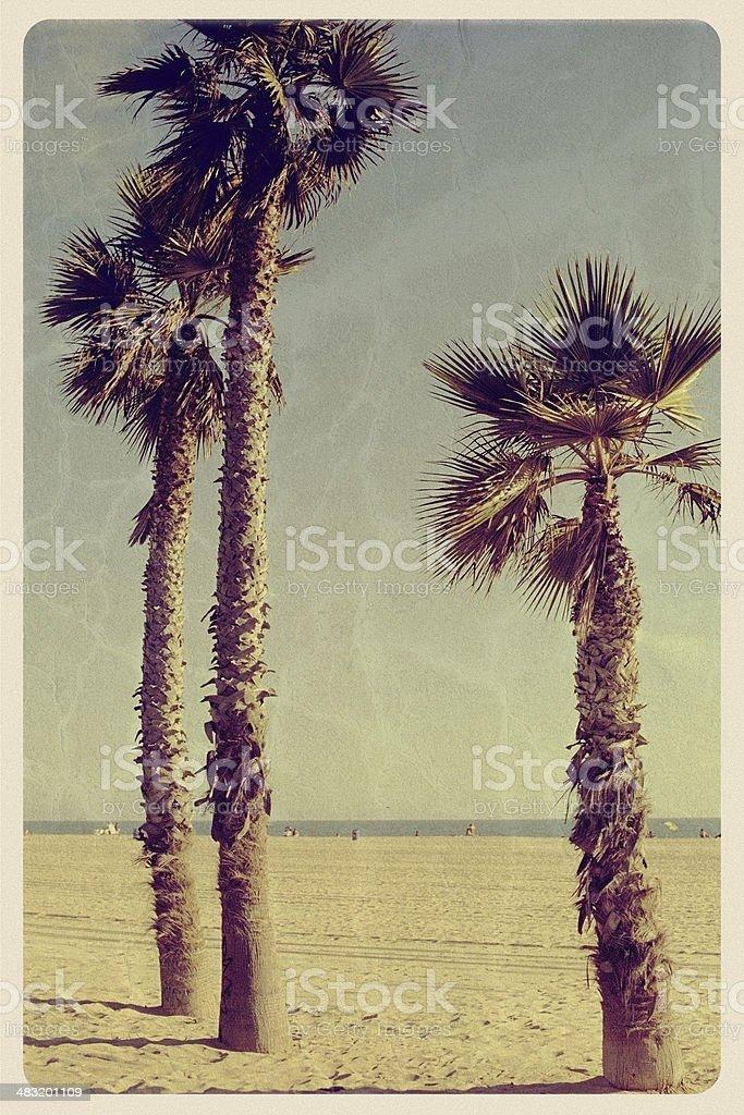 Three Palm Trees on Newport Beach - Vintage Postcard stock photo